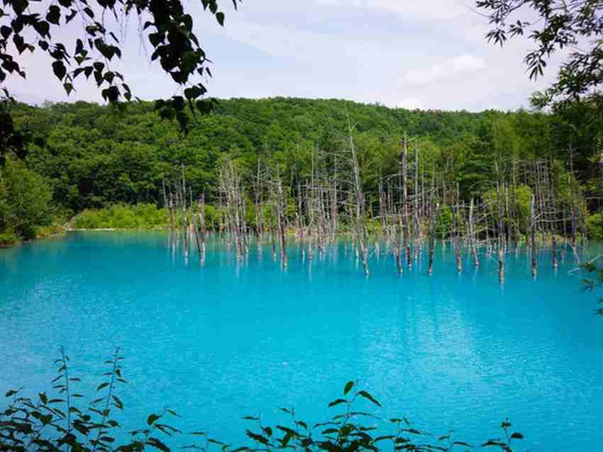 青い池とジュンドック(富良野から美瑛へ) 1